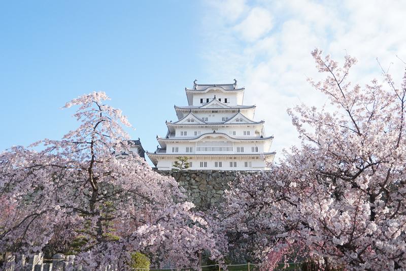姫路城 桜イメージ