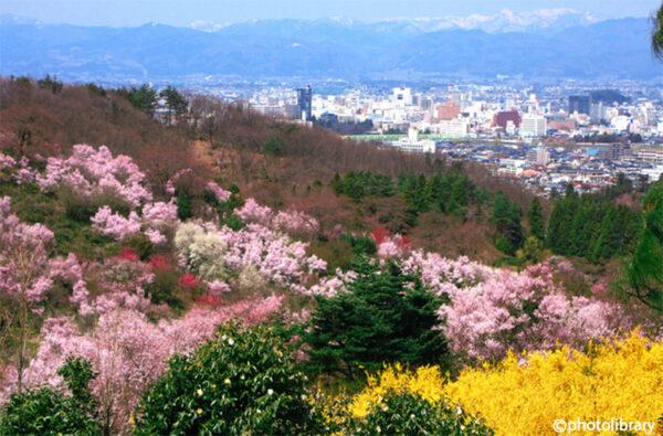 花見山公園 イメージ